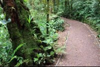 monetverde cloud forest reserve trail 