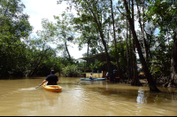manglar isla mangrove kayak going back 