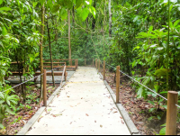 trail for disables at carara national park  - Costa Rica