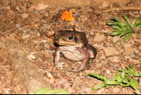 toad las caletas night hike