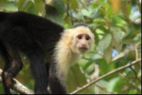 evergreen lodge capuchin 
