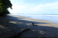 hermosa beach attraction dominical log 