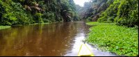 tortuguero national park attraction canoe canal 