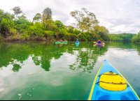 on the canal kayaking platanares mangroves in puerto jimenez