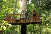 flight of the toucan tree climb combo tour platform 