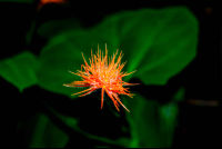 orange flower on los patos trail