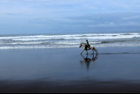 discovery horseback tour the beach 