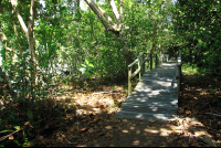 cahuita national park attraction page marsh bridge 