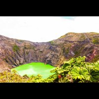 irazu volcano crater with poor man umbrella plants