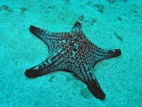 starfish underwater 
