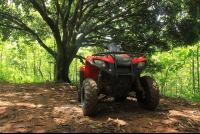 midworld atv mango tree 