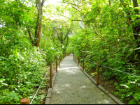 trail for disable at carara national park  - Costa Rica