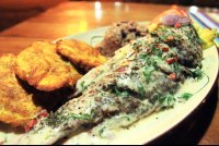 coral caribe coconut broiled red snapper 