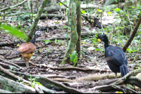 birds walking on the forest floor