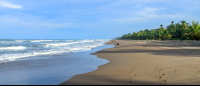 tortuguero national park attraction beach 
