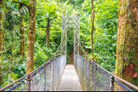 suspension bridge hanging bridges mistico park