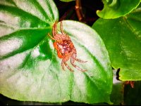 crab on a leaf las caletas night hike