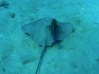 ray underwater 