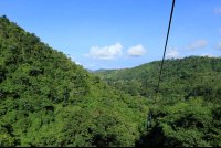 rainforest adventures landscape 