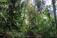 monetverde cloud forest reserve undergrowth 