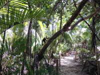 manuel antonio national park attraction beach trail monkey    - Costa Rica