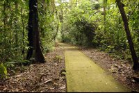 la selva main trail   - Costa Rica