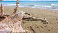 tamales beach logs