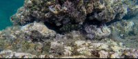 purple tinted reefs tortuga islands 
