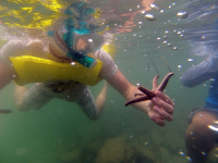 Touching a star fish