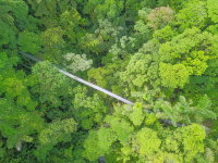 arenal hanging bridges mistico park main bridge aerial view