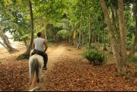 puerto viejo destination horseback ride almond leaves 