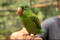 osa animal sanctuary tour page parrot 