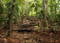 la selva side trail  - Costa Rica