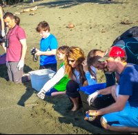 releasing baby turtles turtle hatching at piro beach costa rica