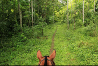 discovery horseback tour secondary forest 
