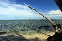 The trunk of a dead palm tree lurches out over the shore