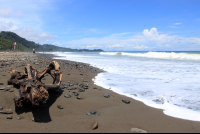 Driftwood washed up on the shore of Dominical Beach