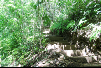 steps toward the montezuma waterfall  - Costa Rica