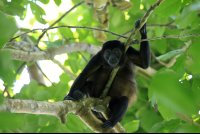 cahuita national park attraction page howler 