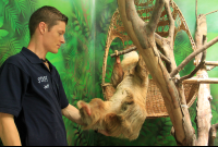 sloth sanctuary helping 