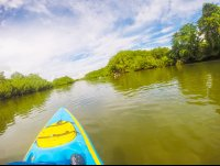 rowing further into platanares mangroves in puerto jimenez