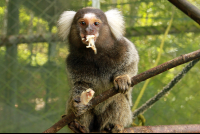 kids saving the rainforest attraction marmoset 
