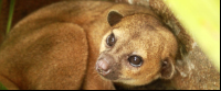 kids saving the rainforest attraction kinky the kinkajou 