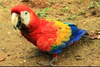osa animal sanctuary tour page scarlet macaw 