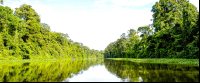forest reflections on tortuguero canal
