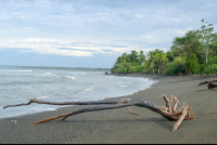 beach at sirena ranger station