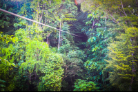 long cable osa palmas canopy tour