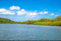 mangrove canal in the tamarindo estuary