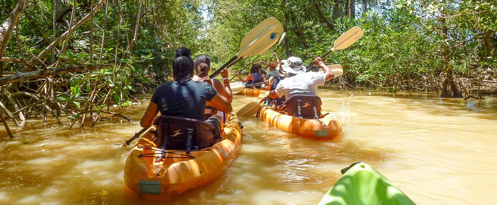 manglar isla mangrove kayak going in 