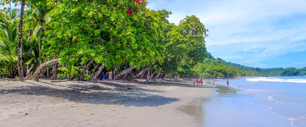 espadilla beach trees 
